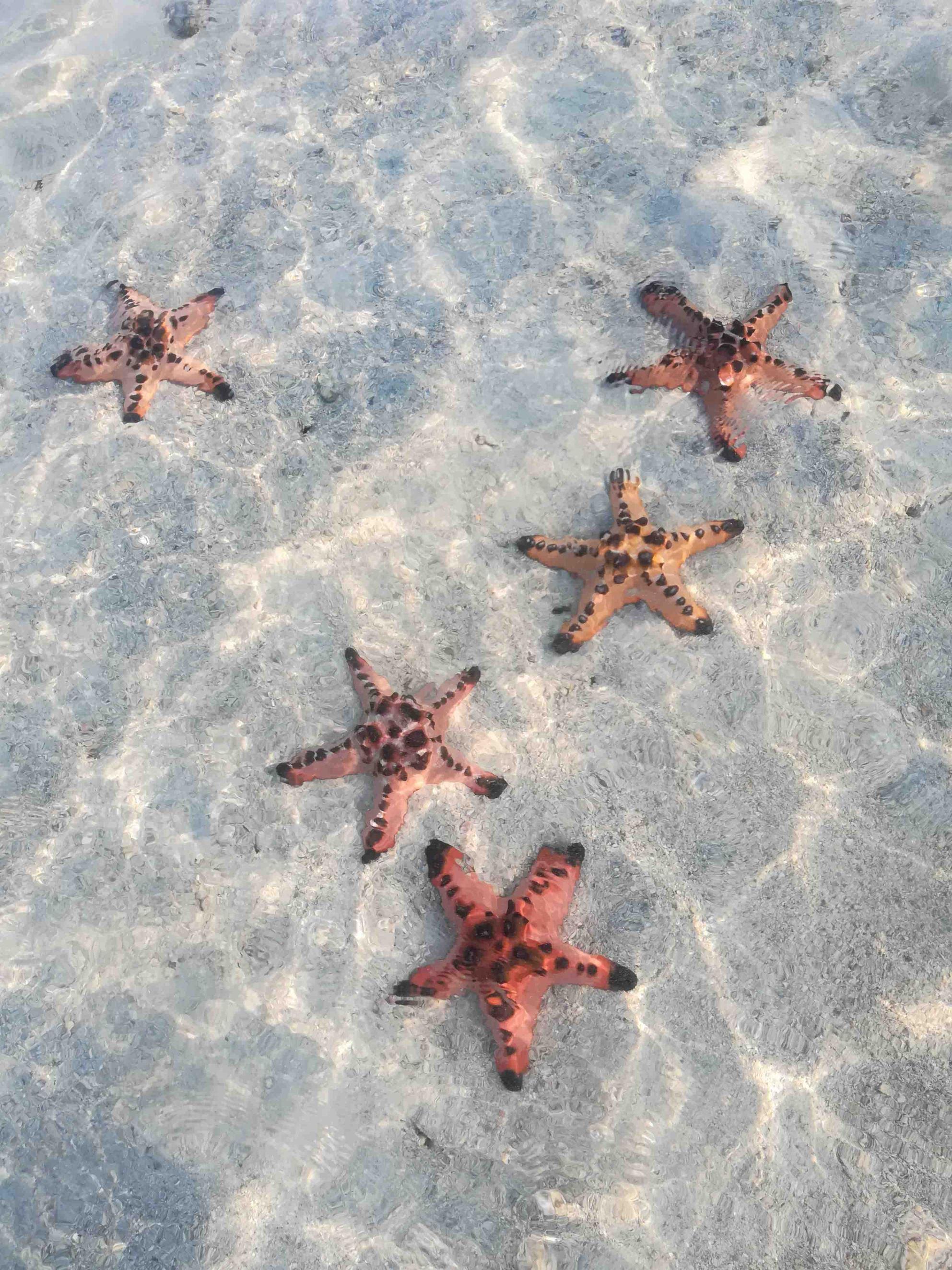 Starfish-Island
