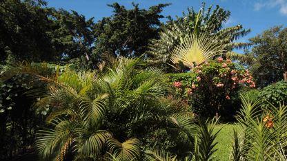 Isla-Guadalupe-Antillas