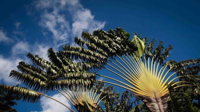 Un día en Guadalupe. Las Antillas Francesas