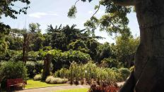 Jardín Botánico de Deshaies