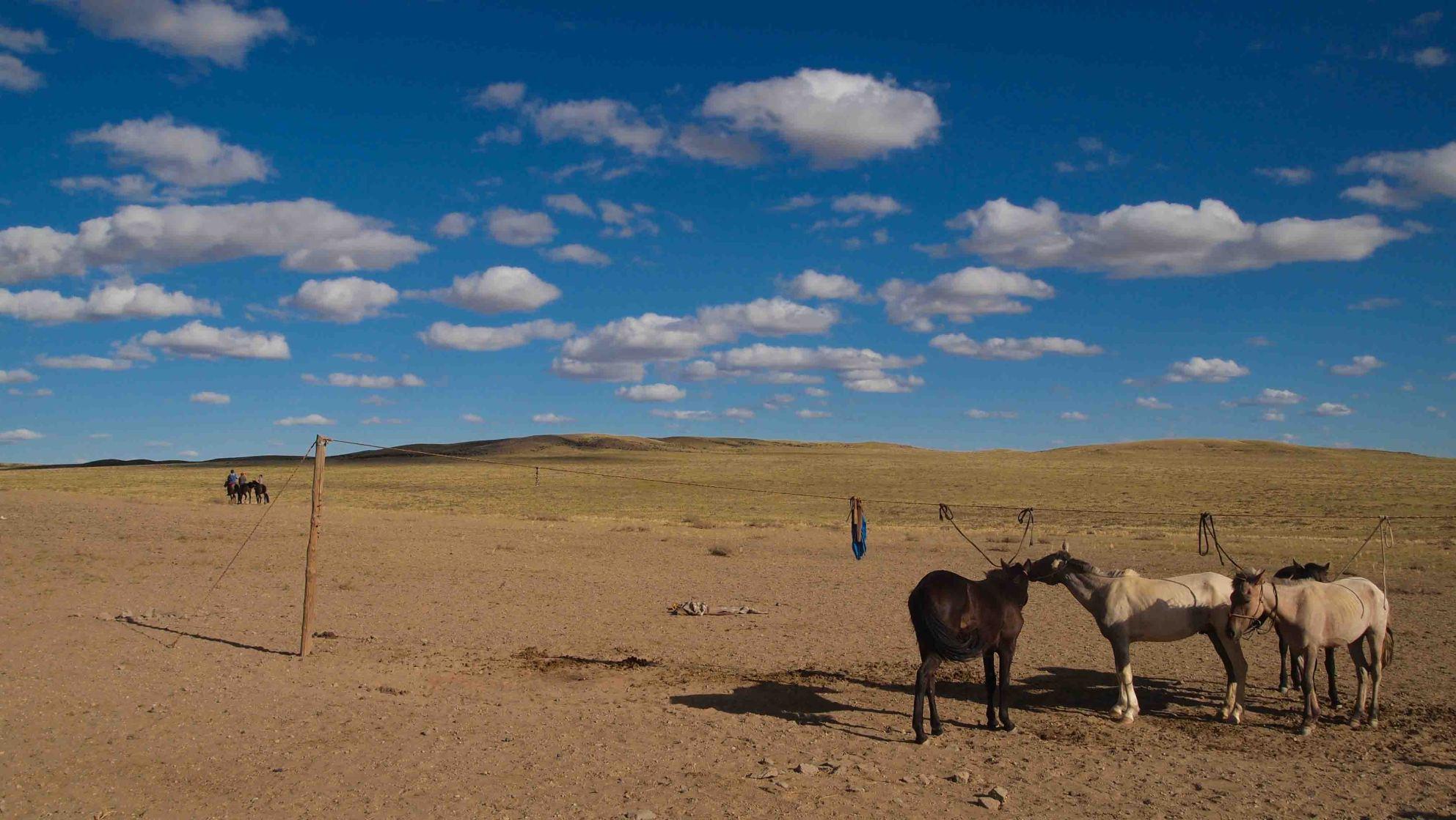 Caballos-Desierto-Gobi