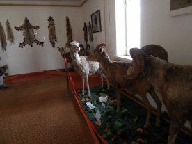 Museo Bayanzag