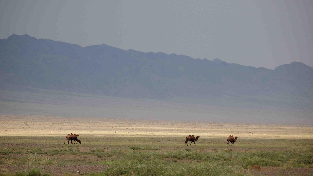 Itinerario por el Desierto delGobi.