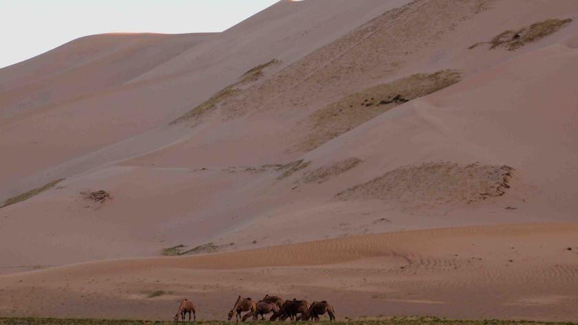 que-ver-en-el-desierto-gobi-dunas-Khongoryn-Els-mongolia