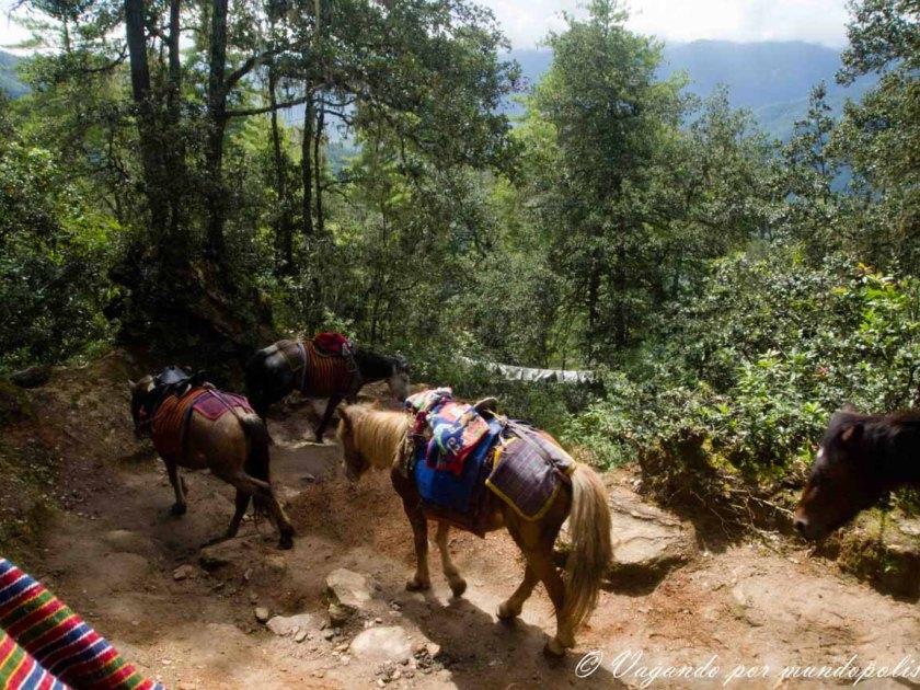 Trekking al Nido del Tigre-Butan